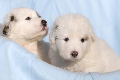 かごの中の2匹の子犬