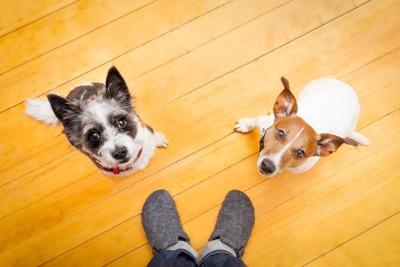飼い主を見上げる2頭の犬