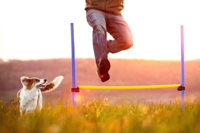 ハードルを跳ぶ人と犬