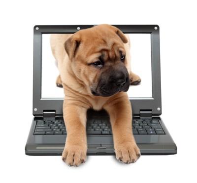 パソコンから出てくる犬