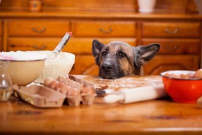 キッチンの台に顔を乗せた犬