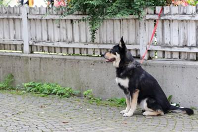 柵につながれている犬