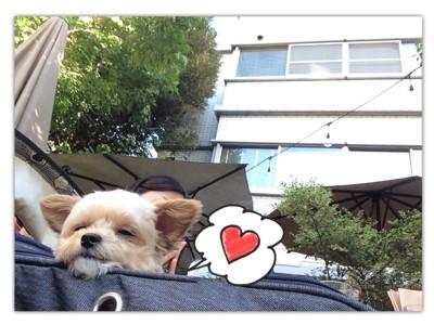 #バギーに顎をのせて寝ている写真#