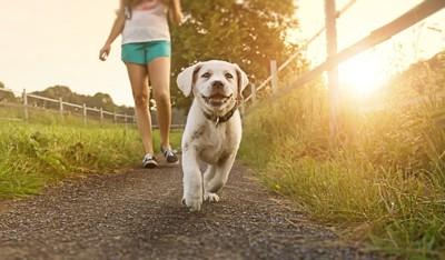 散歩をする少女と子犬