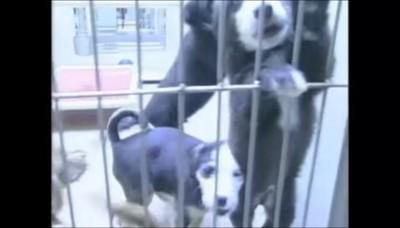 収容されている犬たち