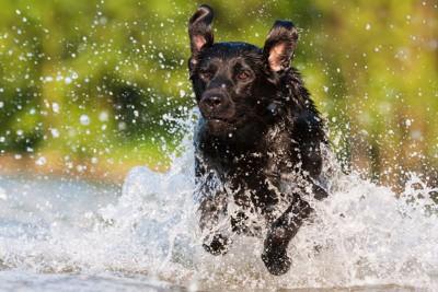 水浴びをする犬