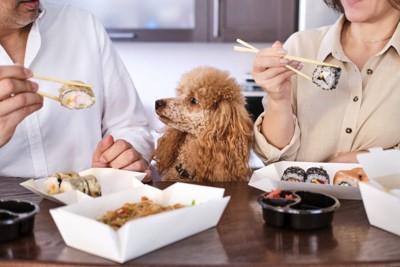 夫婦が食べる食事を見つめる犬