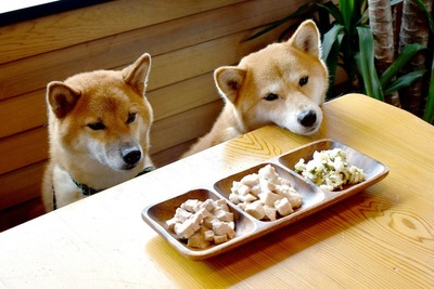 食卓に座ってごはんを待つ二匹の柴犬
