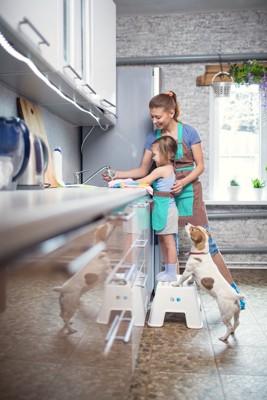 食器を洗う親子と見つめる犬