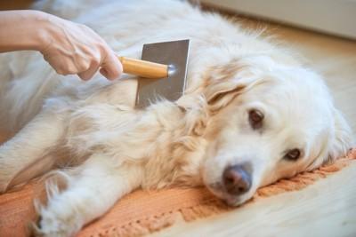 スリッカーブラシをかけてもらう犬