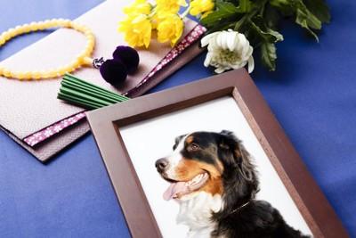 犬の遺影と菊の花