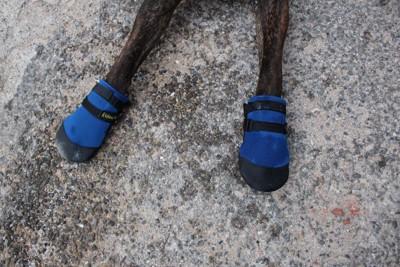靴下を履いている犬の足