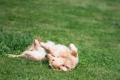フワフワした草の上で寝ている犬