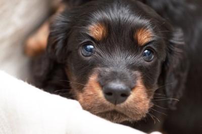 目でおねだりする犬