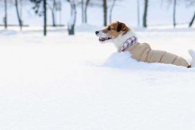 雪に埋もれる犬