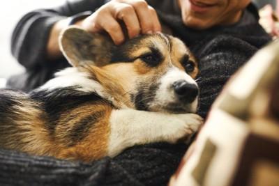 飼い主の腕に収まる犬