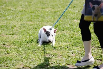 散歩中に嫌がって止まる犬