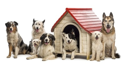 犬小屋の雑種犬たち