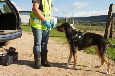 麻薬探知のために働く警察犬