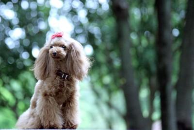 聞き耳を立てている犬