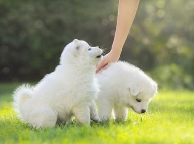 撫でられている犬と飼い主を見る犬