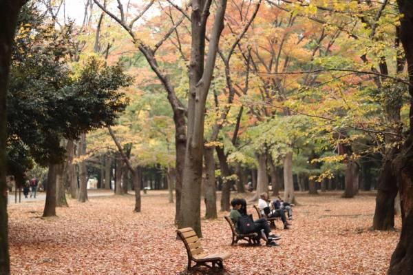 紅葉の中のベンチ