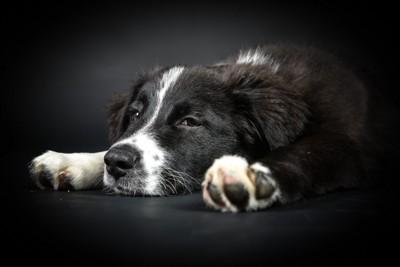 疲れた様子の犬