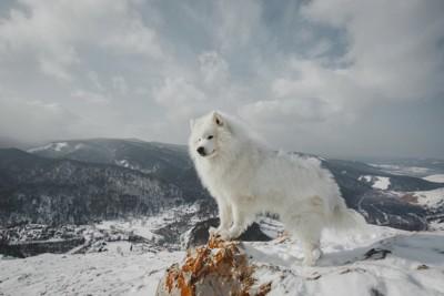 山の雪景色とサモエド