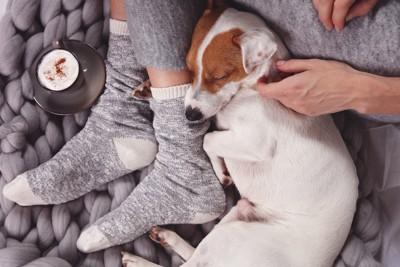 飼い主にぴったりと寄り添って眠る犬
