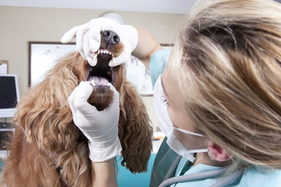 犬の口の中を診察する獣医師