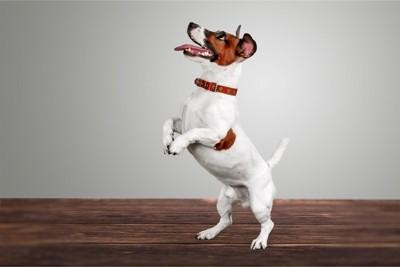 後ろ足で立つ犬