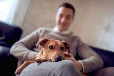 飼い主の膝の上でくつろぐ犬