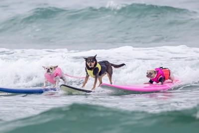 犬とサーフィンする男性