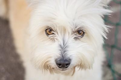 問題行動を起こしている犬の顔