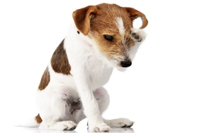 顔を掻く犬