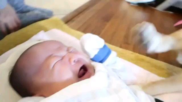 赤ちゃんと犬の手