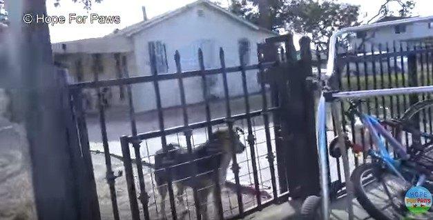 住宅の敷地に入った犬