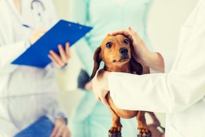 病院で頭をなでられる犬