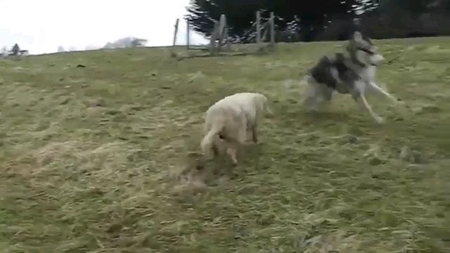 追いかけっこする2匹
