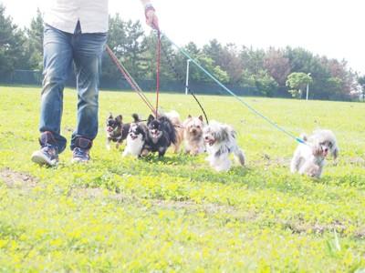 散歩する犬達
