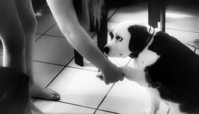 恐る恐る握手する犬