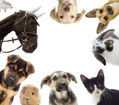 輪になっている様々な動物たち