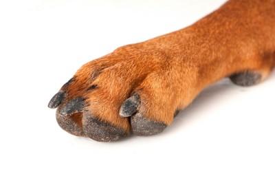 犬の足アップ
