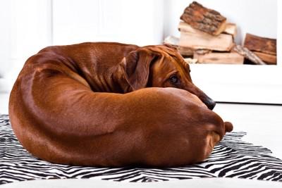 体を丸めて休む犬