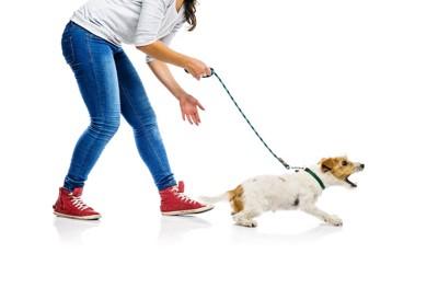 吠えている犬を制止しようとする女性