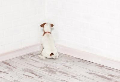部屋の隅で壁に向かっている犬の後ろ姿