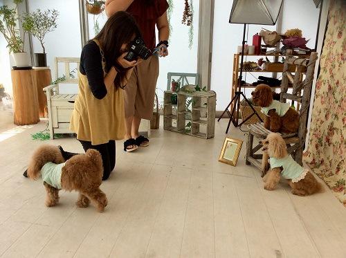 中腰でカメラ構えている犬のカメラマン