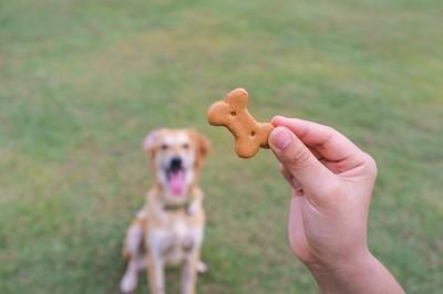 骨型のおやつを持つ飼い主の手を座って見つめる犬