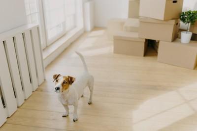 新居でそわそわする犬