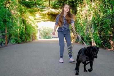 飼い主より先を歩く黒い犬